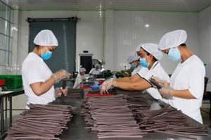 VN-made, eco-friendly straws popular with importers